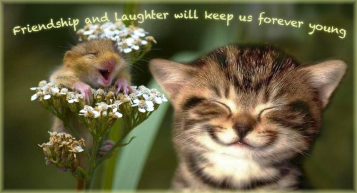 friendship and laughter